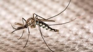 Misiones: El ministro de Salud provincial descartó una epidemia de dengue y contabilizó 35 casos