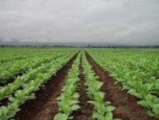 Programa de financiamiento para productores tabacaleros